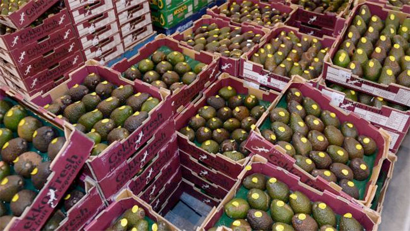 Farmers blamed for avocado shortage